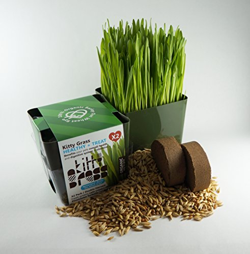 Priscilla's Pet Products Cat Grass Kit - Grow Your Own Grass from Priscilla's Pet Products
