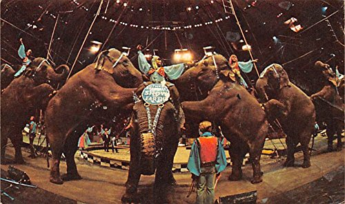 Elephantastic Exciement Ringling Bros and Barnum & Bailey Circus Circus Elephant Postcard