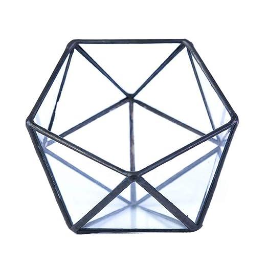 GuanjunLI 1 caja de almacenamiento de vidrio para terrario, joyero ...