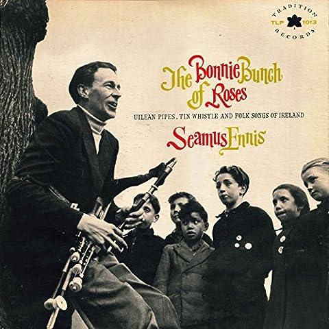The Bonny Bunch of Roses - Everest Rose