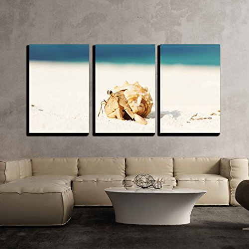 - wall26 - 3 Piece Canvas Wall Art - Hermit Crab on Beach at Maldives - Modern Home Decor Stretched and Framed Ready to Hang - 16