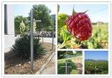 EcoTrellis Raspberry Trellis with Adjustable