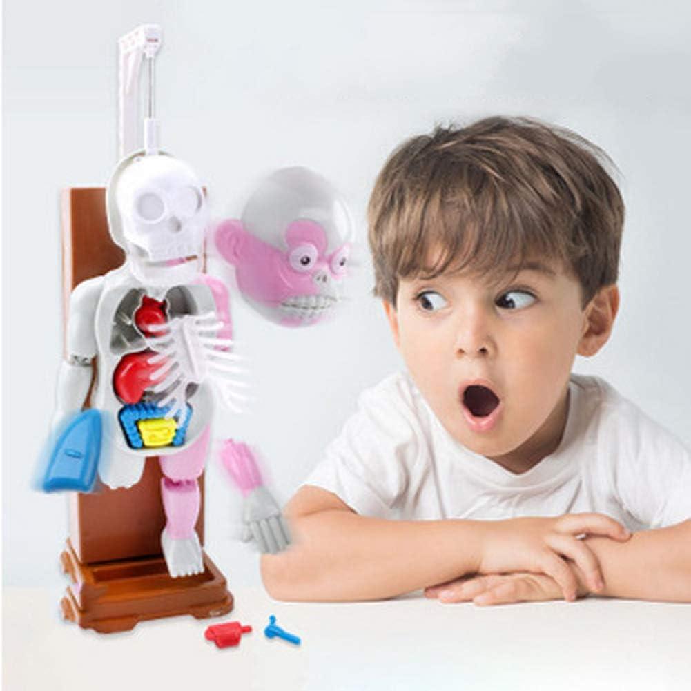 DDT 4D Ensamblado Modelo Escritorio Juego Anatomía Humana Modelo con 16 Cartas Y Horror Sonido Efectos para Niños Niños Muchachas Juguetes Educativos