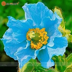 Amapola de Islandia colores mezclados Cortar semillas de flor del jardín de DIY Planta 200 partículas / lot
