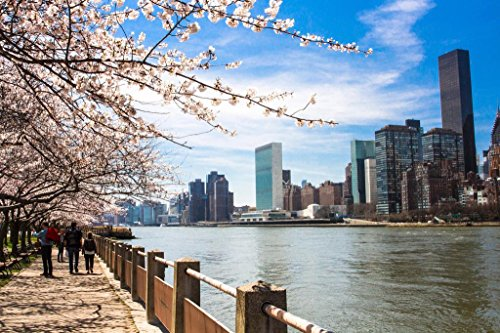 Blooming Trees on Roosevelt Island New York City Photo Art Print Mural Giant Poster 54x36 inch