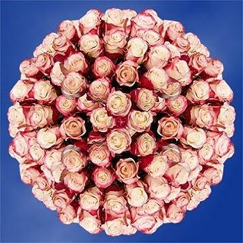 Amazon globalrose 250 fresh cut white roses with red tips globalrose 250 fresh cut white roses with red tips sweetness roses fresh flowers wholesale mightylinksfo