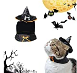 Hillento Cat Apparel