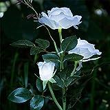 Transer 3 Head Rose Solar LED Waterproof Outdoor Flower Lamp Power Yard Garden Light (White) Review