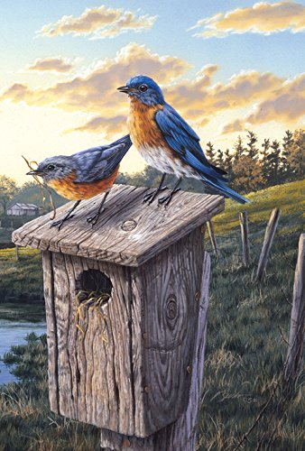 Toland Home Garden Eastern Bluebird Birdhouse 12.5 x 18 Inch Decorative Sunrise Field Bird Garden ()