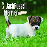 Jack Russell Terrier Puppies 2017 Mini 7x7 (Multilingual Edition)