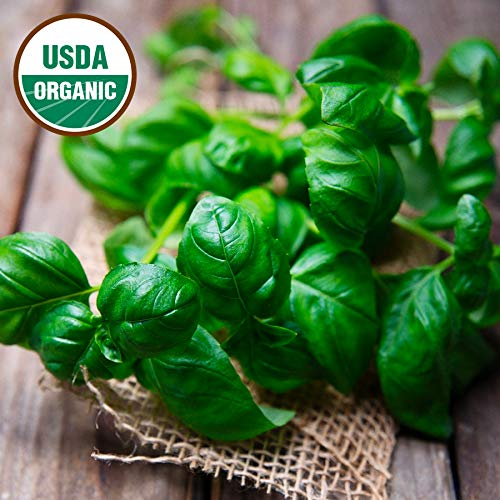- Sweet Basil Seeds 1500+ Non-GMO Seeds Organic Heirloom Genovese Pesto Open-Pollinated High Yield