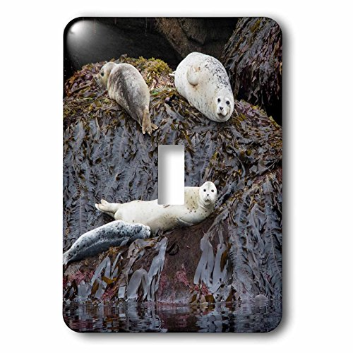 3dRose Danita Delimont - Seals - Harbor Seals Resting at low tide - Light Switch Covers - single toggle switch - National Outlets At Harbor