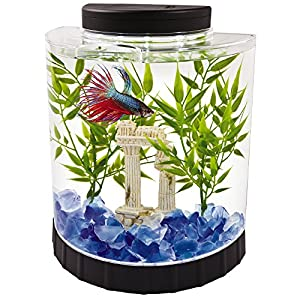 Tetra LED Half Moon aquarium Kit 1.1 Gallons, Ideal For Bettas 19