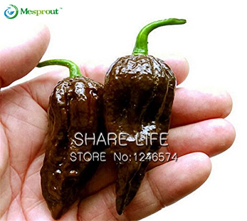 100 seeds Organic Chocolate Naga Jolokia Chilli Seeds Giant pepper Ghost Pepper #32606159827ST -