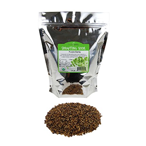 Purple Barley Seeds - Certified Organic - 2.5 Lb Pouch - Handy Pantry Brand - Also Called Black Barley - No Hull - For Barleygrass, Grind for Flour, Food Storage, Soups & More by Handy Pantry (Image #4)