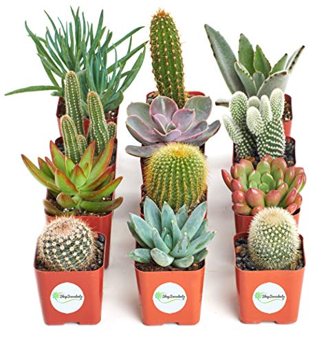Shop Succulents | Cactus & Succulent Collection of Live Plants, Hand Selected Variety Pack of Cacti and Mini Succulents | Collection of 12