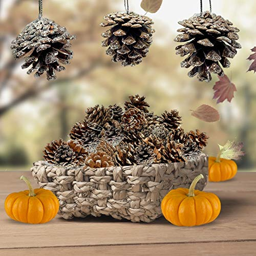 BANBERRY DESIGNS Pine Cone Ornaments - Set of 40 Brown Pine-Cones Silver Glitter Tips - Christmas Hanging Pinecones (Pine Cone Designs)
