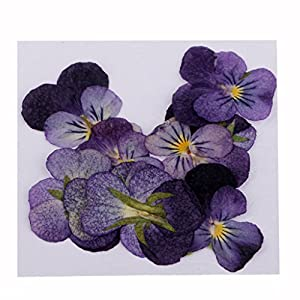 Fityle 10 Pieces 20 mm Pressed Real Flower Violet Flower Dried Flowers Phones Case Scrapbooking for DIY Jewelry Making Crafts 24