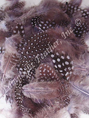 Approx 200, Guinea Plumage Feathers, Many colors to choose from, spotted, per 1/2 ounce bag, by Lamplight Feather Inc (lavender) (1/2 Oz Feathers Bag Craft)