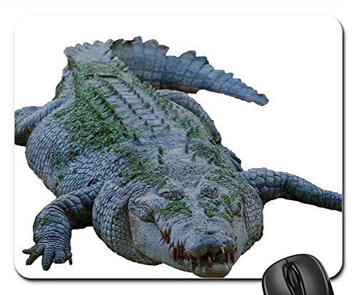 Skirt Sunrise (Mouse Pads - Isolated Crocodile Dangerous Predator Tooth Hunter)