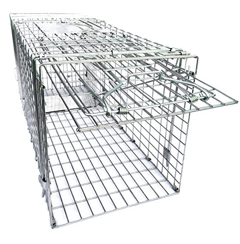 Review Ranger Products Large Collapsible Humane Live Animal Trap Perfect For Raccoons, Stray Cats, Gopher, Opossum, Rabbits