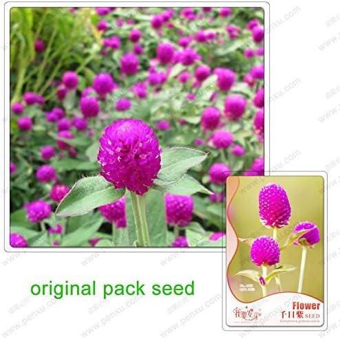 30 semillas / pack, flores amaranto, semillas de amaranto, plantas verdes semillas de flores en maceta de jardín: Amazon.es: Jardín