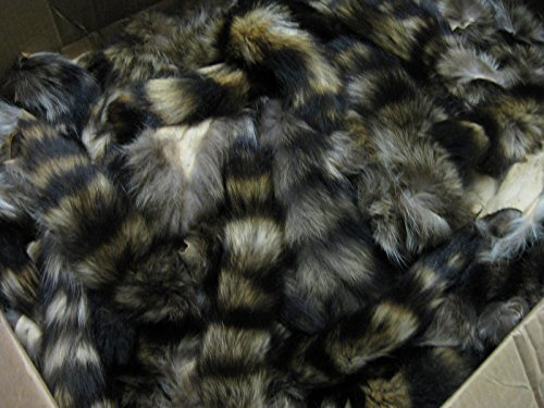 Large Tanned Real Raccoon Tail Coon Fur Crafts #1 Grade for sale  Delivered anywhere in USA