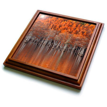 - 3dRose Danita Delimont - Autumn - USA, Georgia, Twin City, Cypress trees in the fall at sunset. - 8x8 Trivet with 6x6 ceramic tile (trv_278906_1)