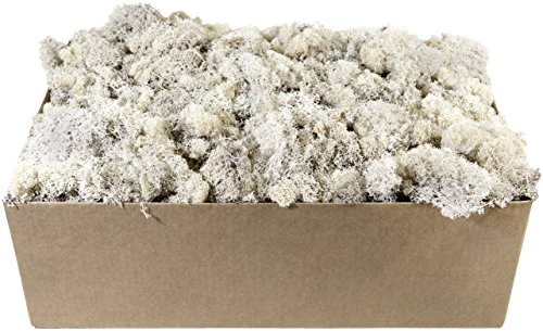SuperMoss (23247) Reindeer Moss Preserved, White, 10lbs Box by Super Moss (Image #1)