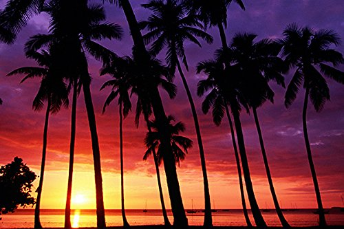 SPECTACULAR SUNSET poster VIOLET-AMBER SKY palm trees sailbo