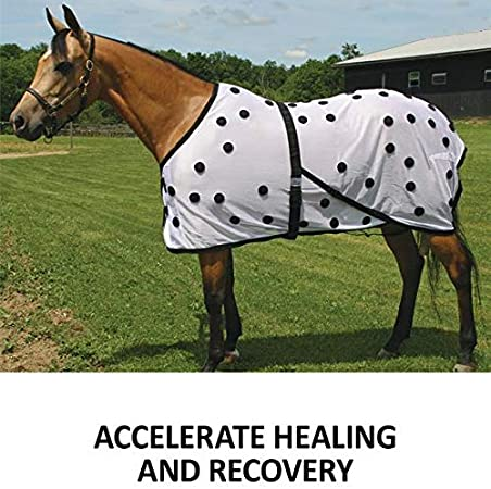 Horse Magnetic Therapy Leg Wraps 1100 Gauss Magnets Healing Therapy Set of 2
