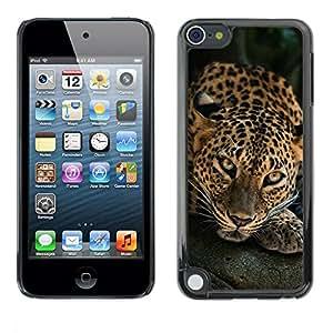 Caucho caso de Shell duro de la cubierta de accesorios de protección BY RAYDREAMMM - Apple iPod Touch 5 - Leopard Big Cat Feline Animal Nature