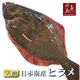 魚水島 天然ヒラメ 平目 日本海産 2.0~2.4キロ物