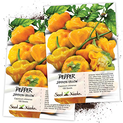 (Seed Needs, Jamaican Yellow Pepper (Capsicum annuum) Twin Pack of 100 Seeds Each Non-GMO)
