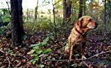 Tenax 2A140073 Pet Fence Select Pet