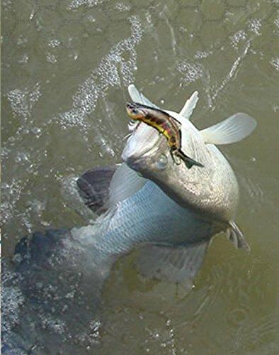 "Discover Fish® 3.0"" Hard Lure Bait Swimbait Minnow Crank Sinking Life Like Multi Jointed Fishingbass Pike NEW"