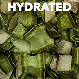 Healthy Herp Tortoise Treat Cactus 0.25-Ounce