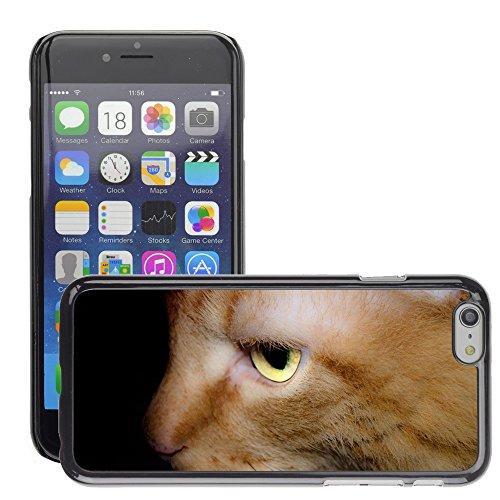 """Just Phone Cases Hard plastica indietro Case Custodie Cover pelle protettiva Per // M00127809 Cat Pet Fond des animaux domestiques // Apple iPhone 6 PLUS 5.5"""""""