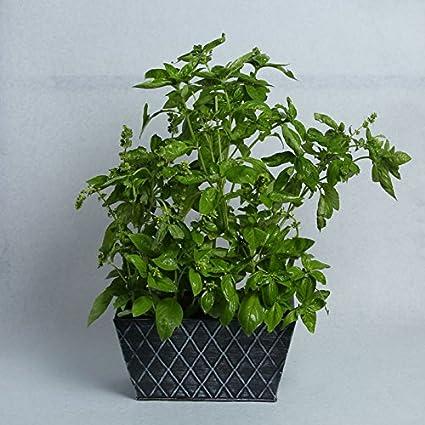 GRASSPER Metal Pot for Plants/Rectangular Planter with Tray Set/Decorative Window Flower Pot/Plant Container