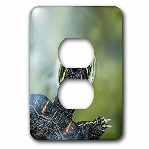 Danita Delimont - Reptile - Turtle swimming, peeping out of the water in St. Augustine, Florida - Light Switch Covers - 2 plug outlet cover - In St Augustine Outlets