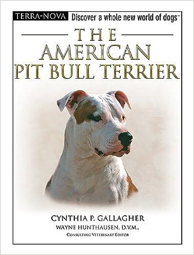 American Pit Bull Terrier (Terra-Nova)