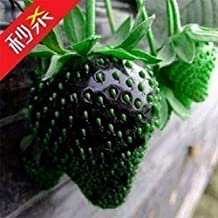 100x Rare Black Strawberry Berry Seed Nutritious Delicious Fruits Plant Organic Heirloom Fresh Seed