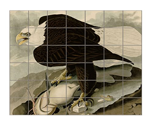 White Headed Eagle #1 (Audubon) Horizontal Tile Mural Satin Finish 36