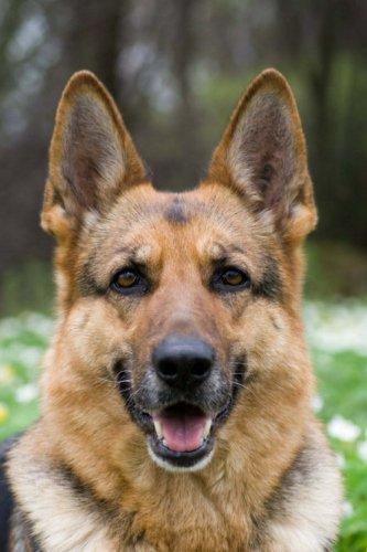 CreateSpace Independent Publishing Platform German Shepherd: Artified Pets Journal/Notebook/Diary, 6