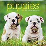 2017 Puppies Monthly Wall Calendar Featuring Full Color Photographs of Dalmatian, Rottweiler, Beagle, Labrador, Dachshund Puppies, and More!, 12 x 12 Inches