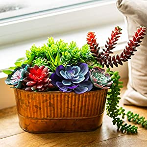 Creative Side Artificial Succulent Plants - 11 Soft Realistic Lifelike - Colorful Faux Succulents Arrangement, Mini Fake Succulent Plants, Large Succulents Unpotted Plant For Planters And Indoor Decor 3