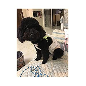 Stock Show Female Dog Diaper Dog Summer Cotton Cute Strawberry with Soft Gauze Sanitary Pantie with Suspender Bathing Dress Jumpsuits Suspenders for Girl Dogs Small Medium Female Dog Puppy, Green