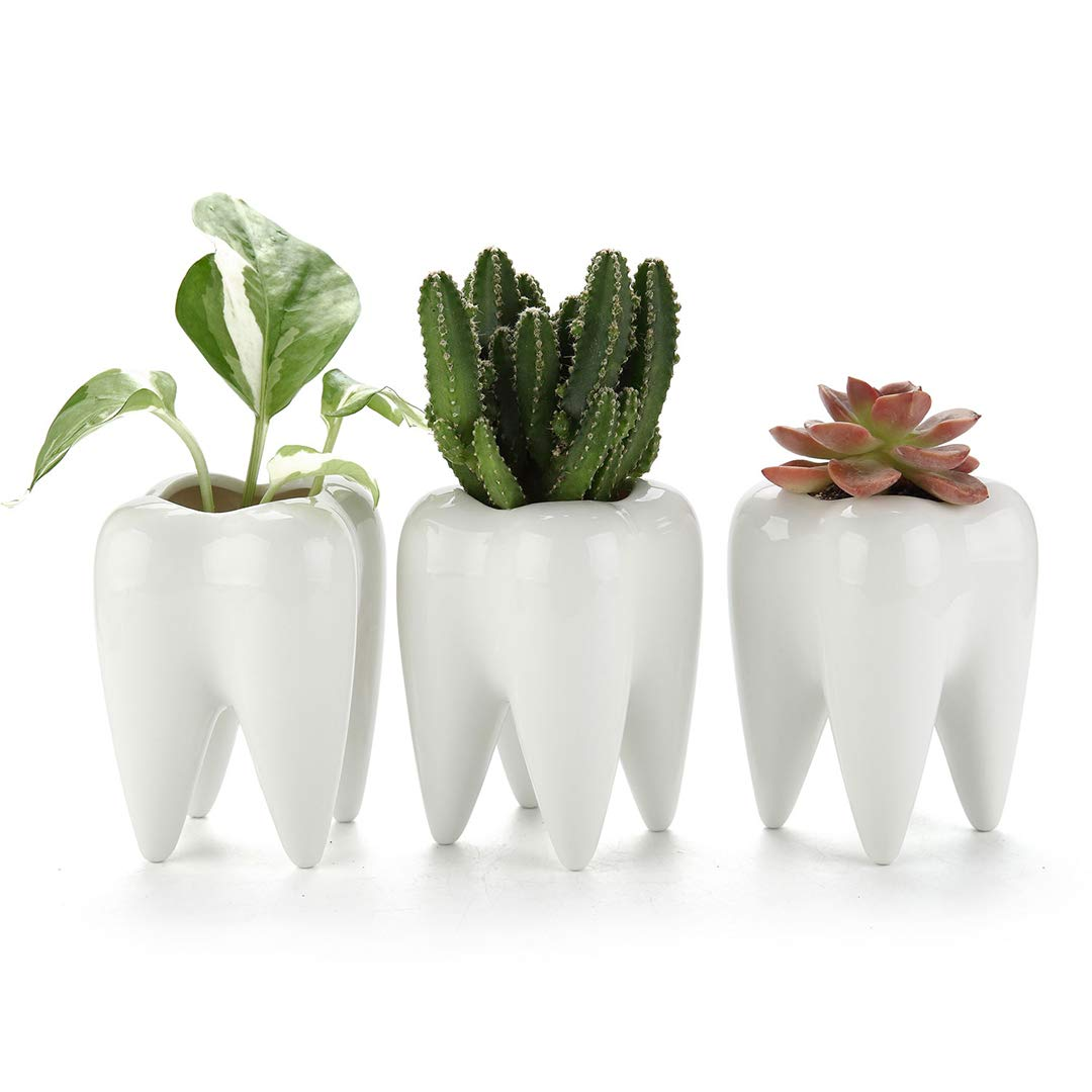 T4U Small Cute Tooth Planter Succulent Pots -Teeth Pencil Holder Office Organizer Gift for Dentist - Mini White Ceramic Planter Pots for Succulents Herbs Cactus - Small Plants Containers Pack of 3