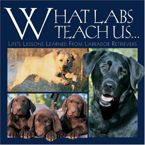What Labs Teach Us: Life's Lessons Learned from Labrador for sale  Delivered anywhere in USA
