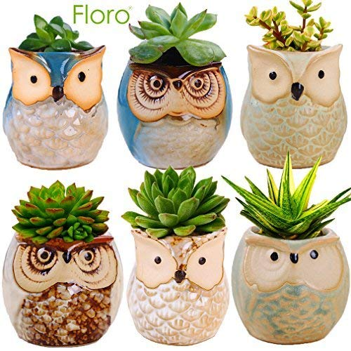 6 Owl Planter Pots - Ideal as Succulent Plant Pots - Gorgeous Owl Design - Includes Drainage Hole - Flower or Bonsai Plant Ceramic Pots for Indoor/Outdoor - Offers All-weather Durability